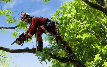 find trusted rated Antrim tree surgeons