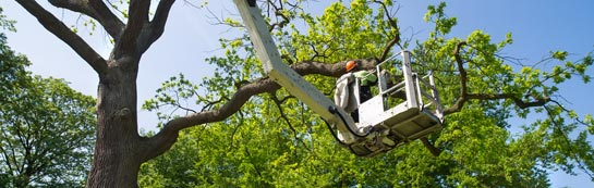 Antrim tree surgery services